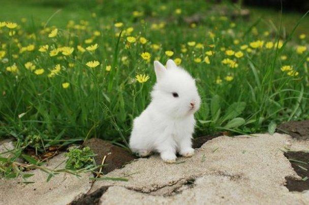 45407_White_Bunny